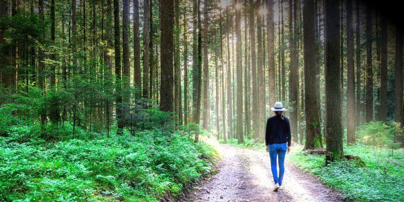 une femme avec chapeau marche sur un sentier lumineux en forêt